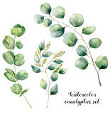 Ensemble d'eucalyptus d'aquarelle Éléments peints à la main d'eucalyptus de dollar en argent de bébé, semé et Illustration floral Photographie stock libre de droits
