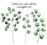 Ensemble d'eucalyptus de dollar en argent d'aquarelle Illustration florale peinte à la main avec les feuilles rondes et les branc Photographie stock libre de droits