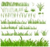 Ensemble d'herbe Photographie stock libre de droits
