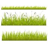Ensemble d'herbe Photo libre de droits