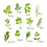 Ensemble d'herbes Photo libre de droits