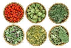 Ensemble d'herbes curatives Herbe sèche Photos stock