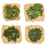 Ensemble d'herbes curatives Herbe sèche Photo libre de droits
