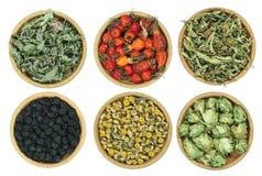 Ensemble d'herbes curatives Herbe sèche pour l'usage dans la médecine parallèle Photographie stock libre de droits