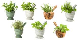 Ensemble d'herbes de jardin Images libres de droits