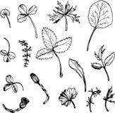 Ensemble d'herbes et de feuilles de dessin d'encre Photos libres de droits