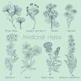 Ensemble d'herbes médicales Photo libre de droits