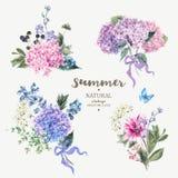 Ensemble d'hortensia de floraison de bouquet de vintage illustration libre de droits