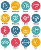 Ensemble d'icône d'organes humains Images stock