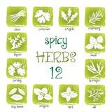 Ensemble d'icône de Web de différentes herbes épicées Photo libre de droits