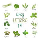 Ensemble d'icône de Web de différentes herbes épicées Photo stock