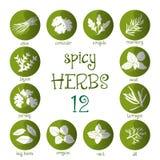 Ensemble d'icône de Web de différentes herbes épicées Image stock