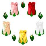 Ensemble d'icônes des roses multicolores sur un fond blanc Vecteur Photo stock