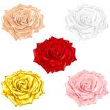 Ensemble d'icônes des roses multicolores sur un fond blanc Vecteur Photo libre de droits