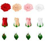 Ensemble d'icônes des roses multicolores sur un fond blanc Vecteur Photographie stock libre de droits