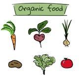 Ensemble d'icônes tirées par la main de légumes Illustration de vecteur Photos stock