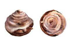 Ensemble d'illustration d'aquarelle d'un petit pain avec le pavot et de lustre d'un sirop de sucre d'isolement sur le fond blanc  illustration de vecteur