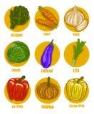 Ensemble d'illustration de vecteur de légumes de couleur Image libre de droits