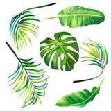 Ensemble d'illustrations botaniques de vecteur des palmettes tropicales dans un style réaliste Images libres de droits