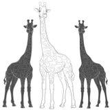 Ensemble d'illustrations de vecteur avec des girafes Objets d'isolement Photographie stock libre de droits