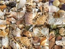 Ensemble d'images de différents types de coquilles marines et océaniques Images stock