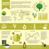 Ensemble d'infographics d'olives Images libres de droits