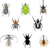 Ensemble d'insectes de Beatles Photo stock