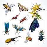 Ensemble d'insectes de vecteur colorés Image libre de droits