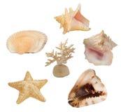 Ensemble d'invertébrés de mer photos stock