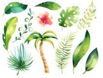 Ensemble d'isolement tropical d'illustration Arbre tropical de papm de boho d'aquarelle, feuilles, feuille verte, dessin, gungle  Image libre de droits