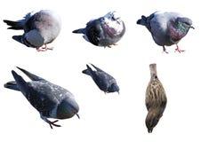 Ensemble d'oiseaux Photos libres de droits