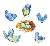 Ensemble d'oiseaux bleus mignons autour du nid avec des oeufs Images libres de droits