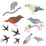 Ensemble d'oiseaux et de fleurs abstraits de pomme Photos stock