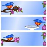 Ensemble de 3 étiquettes s-adresse ou bannières d'oiseau bleu Images libres de droits