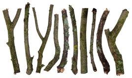 Ensemble de bâtons couverts dans le lichen Image stock