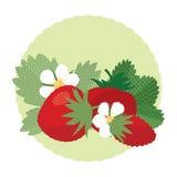 Ensemble de baies et de feuilles de fraisier commun Photographie stock libre de droits