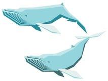 Ensemble de baleine de bosse Photos libres de droits