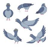 Ensemble de bande dessinée de pigeons drôles Illustrations des oiseaux Images stock