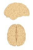 Ensemble de bandes dessinées de cerveau Images stock