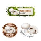 Ensemble de bannière de vecteur de champignon, insigne, autocollant, icône avec le champignon de paris illustration stock