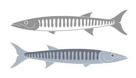 Ensemble de barracuda barracuda sur le fond blanc Images libres de droits