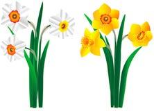 Ensemble de beaux bouquets jaunes et blancs des narcisses Image stock