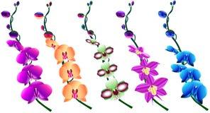 Ensemble de belles branches fleurissantes des orchidées Photographie stock libre de droits