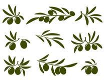 Ensemble de branche d'olivier illustration libre de droits