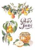 Ensemble de branche et de confiture de poire de fruit d'aquarelle Détails de l'usine de jardin, pot de confiture, marquant avec d Image libre de droits