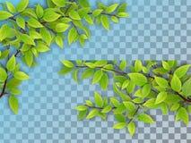 Ensemble de branches d'arbre avec les feuilles vertes Images stock