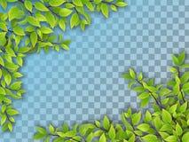 Ensemble de branches d'arbre avec les feuilles vertes Photos libres de droits
