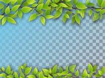 Ensemble de branches d'arbre avec les feuilles vertes Image libre de droits