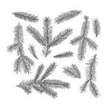 Ensemble de branches d'arbre de sapin d'isolement sur le fond blanc Photographie stock libre de droits