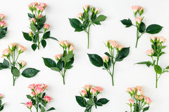 Ensemble de branches des roses roses sur le fond blanc Photo stock